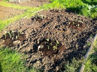 legumes added to mounds